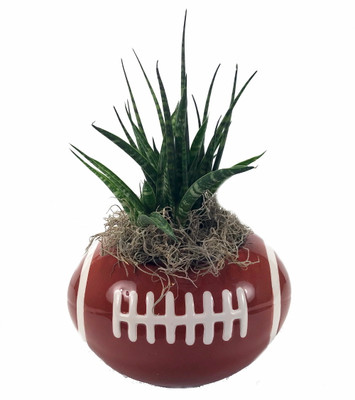 "Football Ceramic Sports Planter with Live Succulent Plant - 7"" x 5"" x 4"""