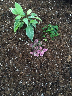 Hirt's Gardens All Natural Terrarium & Fairy Garden Soil - 4 Quart
