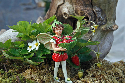 "Little Fairy World's Smallest Strawberry - Fairy Garden Plant/Outdoors - 2.5"" Pot"