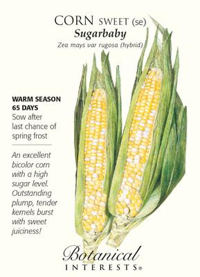 Sugarbaby Sweet Corn Seeds - 10 grams - Botanical Interests
