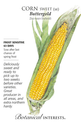 Buttergold Sweet Corn Seeds - 10 grams - Botanical Interests