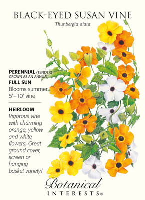 Black Eyed Susan Vine Seed - 500mg - Thunbergia