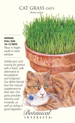 Cat Grass (Oats) Seeds - 45 grams