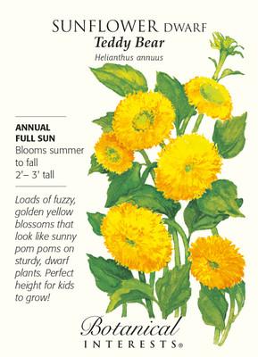 Teddy Bear Sunflower Seeds - 1 gram - Helianthus