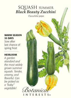 Black Beauty Summer Squash Zucchini Seeds - 4 grams