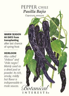 Pasilla Bajio Chile Pepper - 25 Seeds