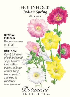Indian Spring Hollyhock Seeds - 800 mg