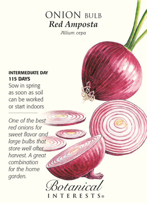 Red Amposta Onion Seeds - 750