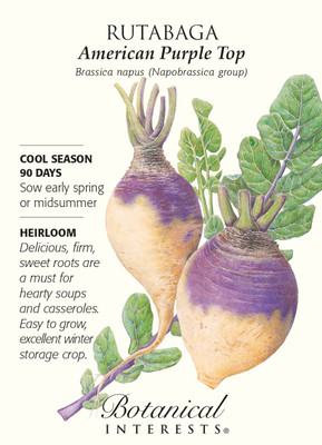 American Purple Top Rutabaga Seeds - 2 grams - Heirloom