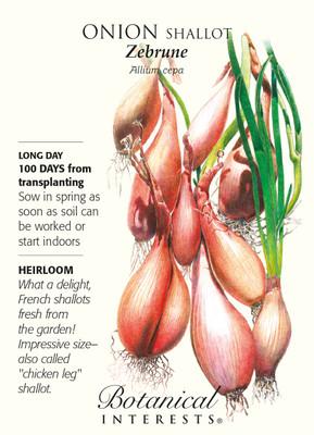 Zebrune Shallot Onion Seeds - 350 mg