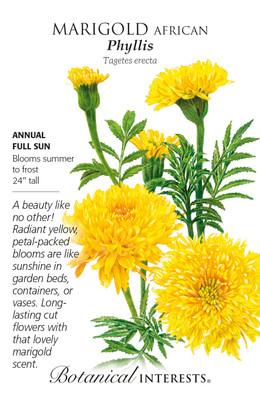 Phyllis African Marigold Seeds  - 100 Milligrams - Botanical Interests
