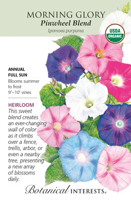 Organic Pinwheel Blend Morning Glory Seeds  - 25 Seeds - Botanical Interests