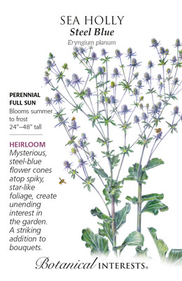 Steel Blue Sea Holly Seeds - 400 Milligrams - Botanical Interests