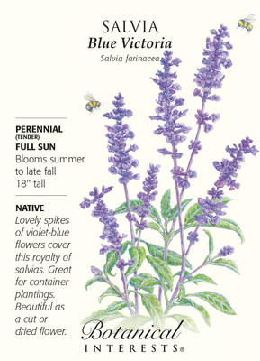 Blue Victoria Salvia Seeds - 100 mg - Perennial