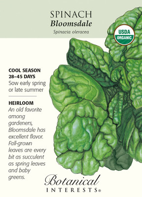 Bloomsdale Spinach Seeds-2.5 grams-Cerrtified Organic