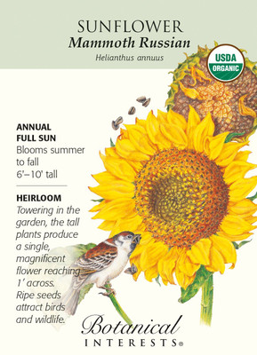Mammoth Russian Sunflower Seeds - 4 grams - Organic