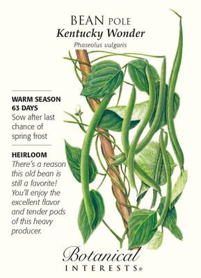 Kentucky Wonder Pole Bean Seeds - 25 grams