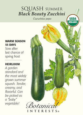 Black Beauty Summer Squash Zucchini Seeds-3g-Organic