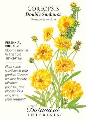 Double Sunburst Coreopsis Seed - 800 mg