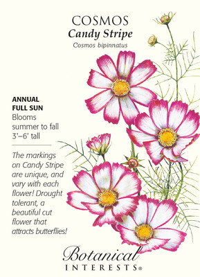 Candy Stripe Cosmos Seeds - 500 mg - Annual