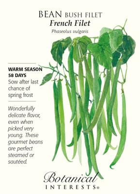 French Filet Bush Bean Seeds - 20 grams