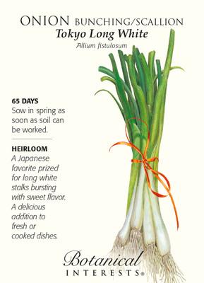 Tokyo Long White Bunching Onion Seeds - 2 grams