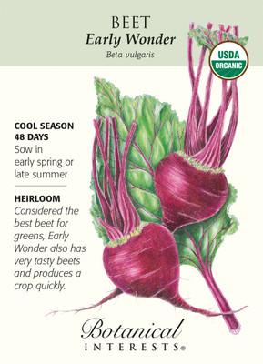 Early Wonder Beet Seeds - 2 grams - Organic