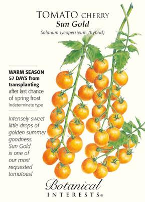 Sun Gold Cherry Tomato - 10 Seeds - Very Sweet