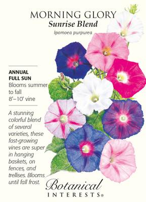 Sunrise Blend Morning Glory Seeds - 2 grams