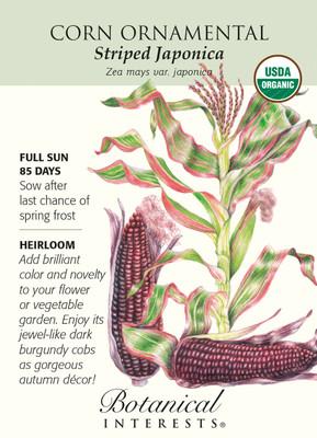 Organic Striped Japonica Ornamental Corn Seeds - 5 grams