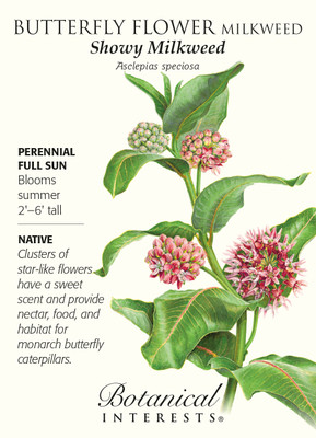 Showy Milkweed Butterfly Flower Seeds - 150 mg - Asclepias speciosa