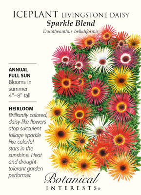 Sparkle Blend Iceplant Livingstone Daisy Seeds - 250 mg