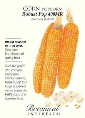 Robust Pop 400MR Popcorn Corn Seeds - 10 grams