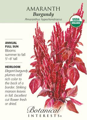 Burgundy Amaranth Seeds - 750 mg - Organic