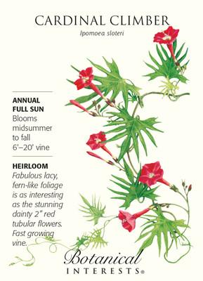 Cardinal Climber Vine Seed - 1.5 grams - Ipomoea