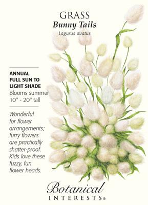 Bunny Tails Grass Seeds - 300 mg - Lagurus