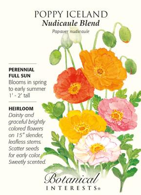 Nudicaule Blend Iceland Poppy Seeds - 400 mg