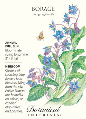 Borage Herb Seeds - 1 gram - Annual