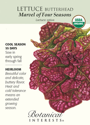 Marvel of the Four Seasons Organic Lettuce Seeds-1 Gram