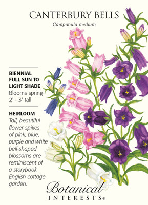 Canterbury Bells Bellflower Seeds - 500 mg - Campanula