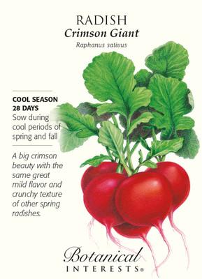 Crimson Giant Radish Seeds - 6 grams