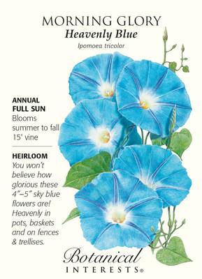 Heavenly Blue Morning Glory Seeds - 2.5 grams