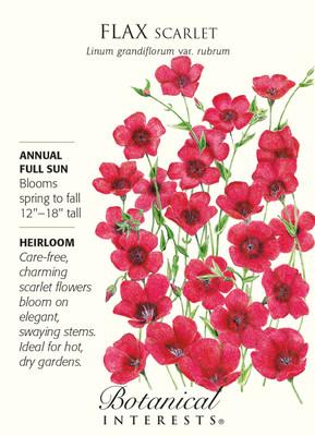Scarlet Flax Seeds - 1.5 grams - Linum grandiflorum