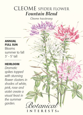 Cleome Spider Flower Fountain Blend Seeds - .40 grams