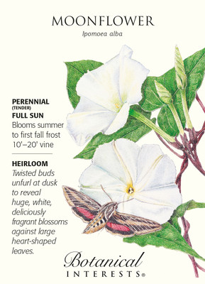Moonflower Seeds - 5 grams - Ipomoea