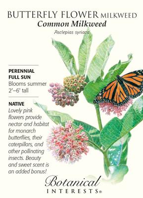 Common Milkweek Butterfly Flower Seeds - 150 mg - Asclepias syriaca
