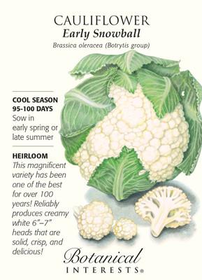 Early Snowball Cauliflower Seeds - 750 mg - Heirloom