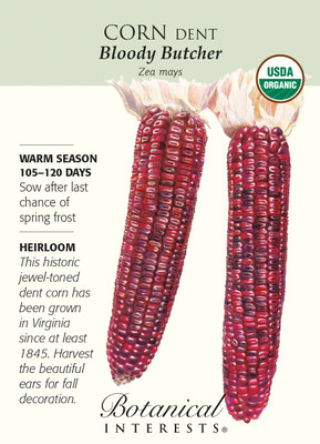 Organic Bloody Butcher Dent Corn Seeds - 10 grams