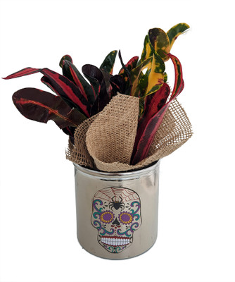 "Day of the Dead Planter + Live Croton Plant - 4.5"" x 4.5"" - Purple Spider"