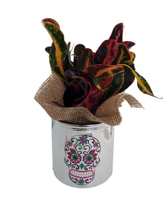 "Day of the Dead Planter + Live Croton Plant - 4.5"" x 4.5"" - Pink Flower"